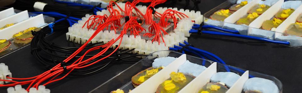 Eduardo Miranda's biocomputer.