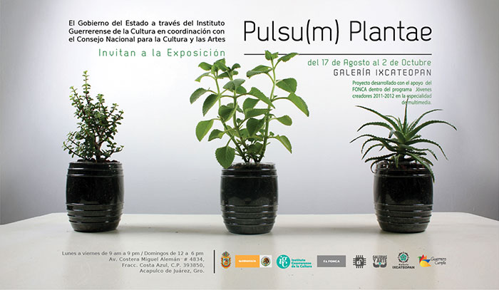 Imagen PulsumPlantae